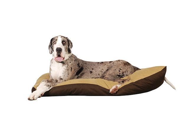 Razas de perros propensas al cáncer