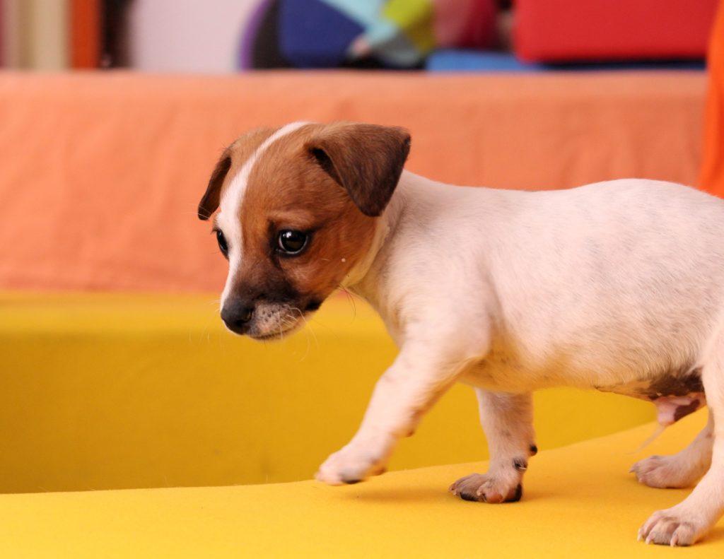 Qué comen los cachorros recién nacidos